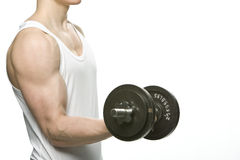 Man performing a dumbbell curl. A torso shot of a man performing a dumbbell curl in his right hand on a white background Stock Images