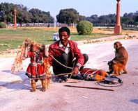 Man with performing monkeys, Delhi. Stock Image
