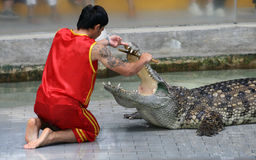 A man performs his Crocodile Show Royalty Free Stock Photos