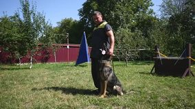 Man and pet, dog trainer doing exercise with German Shepherd.  stock footage