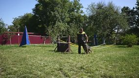 Man and pet, dog trainer doing exercise with German Shepherd.  stock video footage