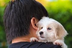 Man petting cute maltese puppy on his shoulder.  Royalty Free Stock Photo