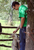 A man petting a goat Royalty Free Stock Photos