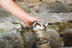 Man is petting tabby cat on a street of Entrevaux, France. Royalty Free Stock Photography