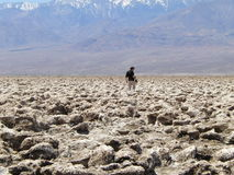 Man with photo camera in desert stock image