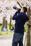 Man photographer taking pictures in nature. Young man photographer taking pictures of the path and cherry blossoms tree at park Royalty Free Stock Photos