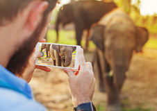 Man photographing baby elephant with his mobile phone camera. Talented man photographing baby elephant with his mobile phone camera in Chitwan national park stock photo