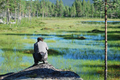 Man photographing a swamp in taiga forest. Royalty Free Stock Photo