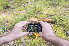 Man photographs on the camera edible mushrooms boletus, chanter. Elle, leccinum in the moss in a forest stock photos