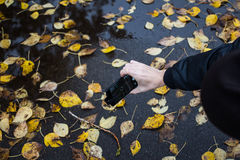 Man photographs leaves in the park Stock Image
