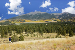 A Man Photographs the San Francisco Peaks in Fall Stock Photography
