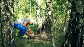 Man pick mushroom and put it in basket near birch tree trunk. 4K stock video footage