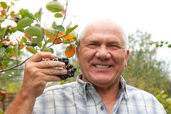 Man in chokeberry plant Stock Images