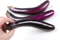 Man picking a eggplant Stock Photography
