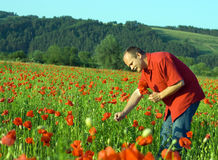 Man picking flowers Stock Image