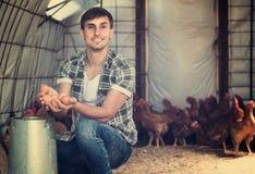 Man picking fresh eggs in chicken house Stock Photo