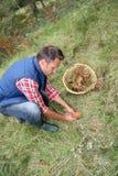 Man picking mushrooms Royalty Free Stock Images