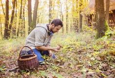 Man picking mushrooms Royalty Free Stock Photos