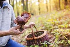 Man picking mushrooms Stock Image