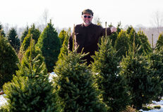 Man picking out a Christmas tree Royalty Free Stock Photo