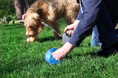 Man  Picking up / cleaning up dog droppings Royalty Free Stock Images