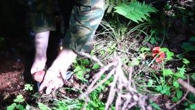 Man picks up two mushrooms stock video
