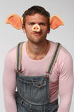 Man in pig suit. Crazy man. Man wearing pig suit over gray background Stock Photography