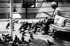 Man Pigeons Lonely Feeding Bench Royalty Free Stock Photos