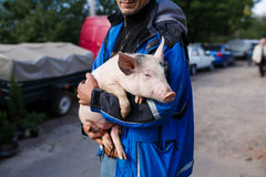 The man with piglet. Kamianka, Ukraine - September 28 2016: Native ukrainian peasant holds a cute piglet in his hands Stock Photos
