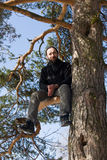 Man on a pine branch Stock Photo
