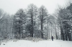 Man in pine forest in winter with snow Stock Image