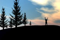 Man on pine tree forrest Stock Photos