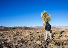 Man pissing on a cactus Royalty Free Stock Photos