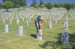 Man Placing Flags at Graves, Los Angeles, California Stock Image