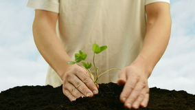 Man planting a green plant Stock Photos