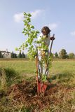 Man planting a new tree stock photography