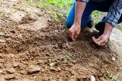 Man Planting Plant Stock Image