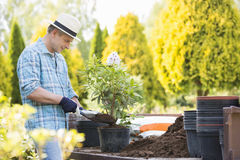 Man planting pot at garden Stock Photography
