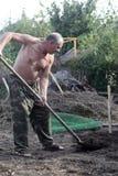 Man planting seedling Royalty Free Stock Photos