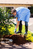 Man planting shrub home garden. Young man digging a hole before planting a shrub in home garden Royalty Free Stock Images