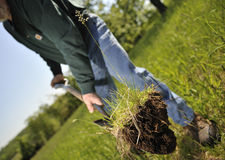 Man planting tree. Man planting a tree sappling in a grassy field royalty free stock photos
