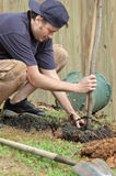 Man planting a tree Stock Image