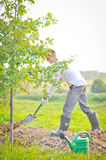 Man planting a tree. Man in his wedding day is planting an oak tree. He has white shirt and silver/black trousers. Holding a shovel in his hands Stock Photos