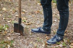 Man plants a tree, a young male with a shovel digs the ground. Nature, environment and ecology concept. Royalty Free Stock Photo
