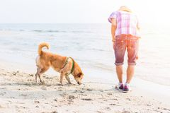 A man play with the dog on the beach. A man play with the dog on the beach and sunset Royalty Free Stock Images