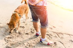 A man play with the dog on the beach. A man play with the dog on the beach and sunset Stock Photo