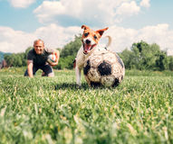 Man play with dog on the green meadow Royalty Free Stock Photo