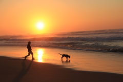 Man play with a dog at sunset on the beach Stock Photography