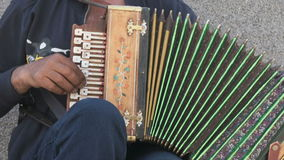 A man playing accordion in summer outdoors stock video