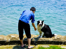 A man playing with a Border Collie. A guy playing with a wet border collie dog on shore near fushan bay in qingdao city shandong province China Royalty Free Stock Photos
